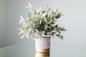 Pflanze im Topf auf Glastisch
